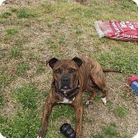 Adopt A Pet :: Brin - sanford, NC