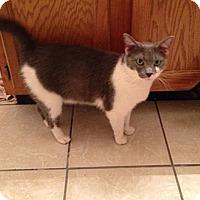 Adopt A Pet :: Krissy - Albany, NY