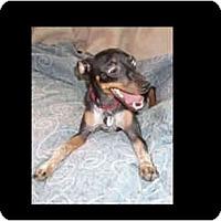 Adopt A Pet :: Kobe - Phoenix, AZ