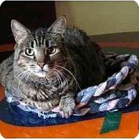 Adopt A Pet :: Holly - Portland, OR