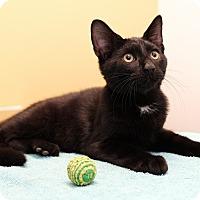 Adopt A Pet :: London - Brooklyn, NY
