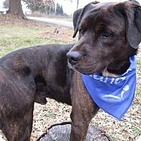 Adopt A Pet :: SHADOW - Greensboro, NC