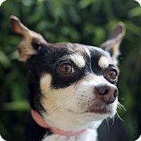 Adopt A Pet :: Ed - Berkeley, CA