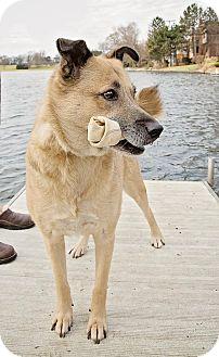 Shepherd (Unknown Type) Mix Dog for adoption in Barrington Hills, Illinois - Sampson