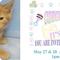 Adopt A Pet :: Trinidad - Northfield, OH