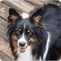 Adopt A Pet :: Holly - Orlando, FL