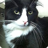 Adopt A Pet :: Ellie - Riverhead, NY