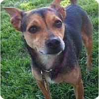 Adopt A Pet :: Napoleon - Windham, NH