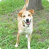 Adopt A Pet :: Dixie - Kingwood, TX