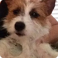 Adopt A Pet :: Chigger in Houston - Houston, TX