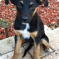 Adopt A Pet :: Popcorn - Long Beach, CA