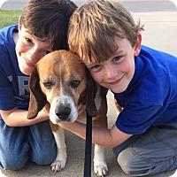 Adopt A Pet :: Bradley - Conway, AR