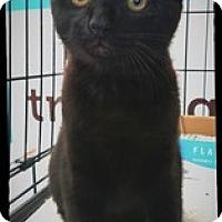 Adopt A Pet :: Ace - Richmond, VA