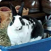 Adopt A Pet :: Oscar - Woburn, MA