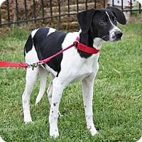 Adopt A Pet :: Ethan - Marietta, OH