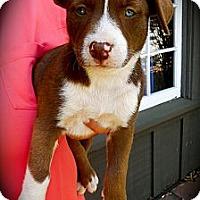 Adopt A Pet :: Sadie - Cypress, CA