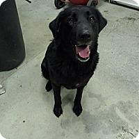 Adopt A Pet :: Zoey - Chewelah, WA