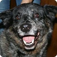 Adopt A Pet :: Brisbon - Canoga Park, CA