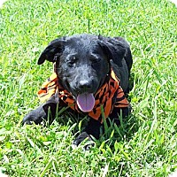 Adopt A Pet :: NUTMEG - Glastonbury, CT