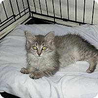 Adopt A Pet :: Paulette - Speonk, NY