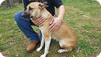 Shepherd (Unknown Type) Mix Dog for adoption in New Milford, Connecticut - Magdalyn