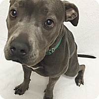 Adopt A Pet :: Baby - Mission Viejo, CA