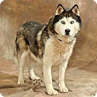 Adopt A Pet :: Franklin - Cashiers, NC