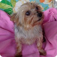 Adopt A Pet :: Cigna - Crump, TN