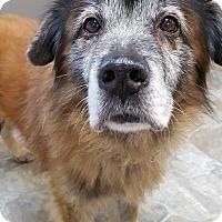 Adopt A Pet :: Chip - Fennville, MI