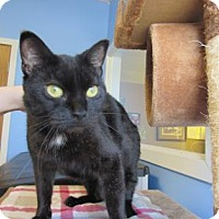 Adopt A Pet :: Leah - Northfield, MN