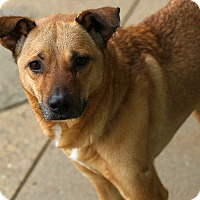 Adopt A Pet :: Butterball - Lafayette, IN