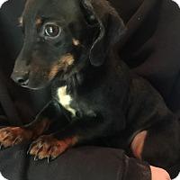Adopt A Pet :: Donald - SOUTHINGTON, CT