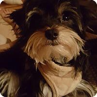 Adopt A Pet :: Vern - St. Louis Park, MN