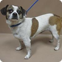 Adopt A Pet :: GIDGET - Reno, NV