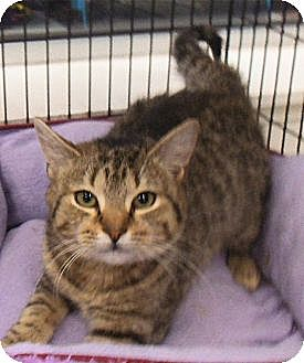 Domestic Mediumhair Kitten for adoption in Bear, Delaware - Merry