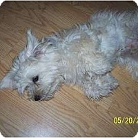 Adopt A Pet :: Salty - Andrews, TX
