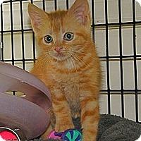 Adopt A Pet :: Zeus - Victor, NY