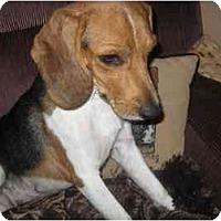 Adopt A Pet :: Wren - Phoenix, AZ