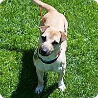 Adopt A Pet :: Harley - Hastings, NY