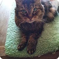 Adopt A Pet :: Trixie - Richfield, OH