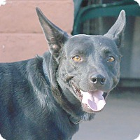 Adopt A Pet :: Jazzie - Las Cruces, NM