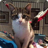 Adopt A Pet :: Jingle - Stanhope, NJ