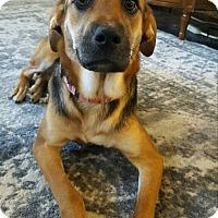 Adopt A Pet :: Sugar Baby - New Oxford, PA
