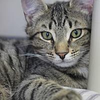 Adopt A Pet :: Mickie - Carlisle, PA