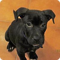 Adopt A Pet :: Speaker - Houston, TX