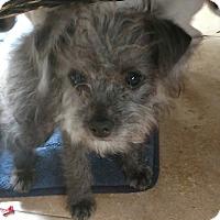 Adopt A Pet :: Mo - San Diego, CA