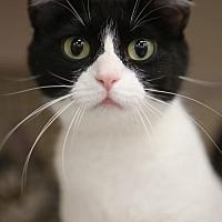 Adopt A Pet :: Panda Bear - Olive Branch, MS