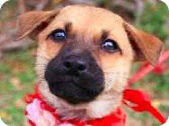Shepherd (Unknown Type)/Terrier (Unknown Type, Medium) Mix Puppy for adoption in San Ramon, California - Emma