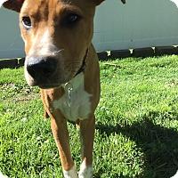 Adopt A Pet :: Gunnar - Lancaster, PA