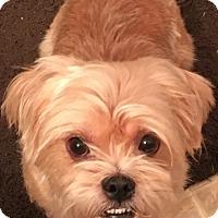 Adopt A Pet :: Bells - PLAINFIELD, IN